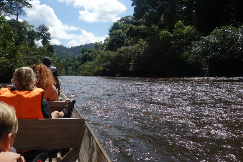 Bådtur ind i Taman Negara National Park