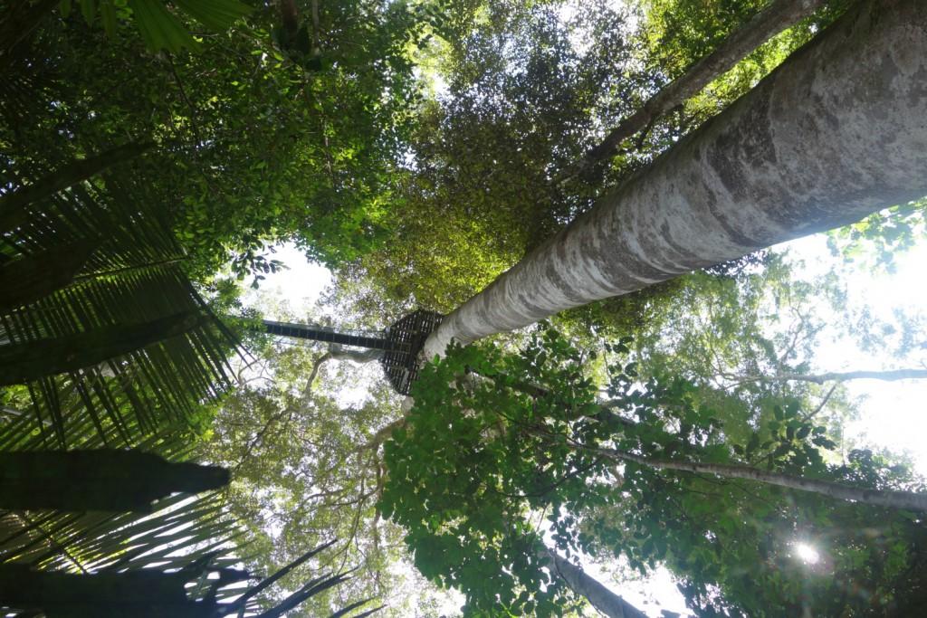 Canopy turen set fra jorden