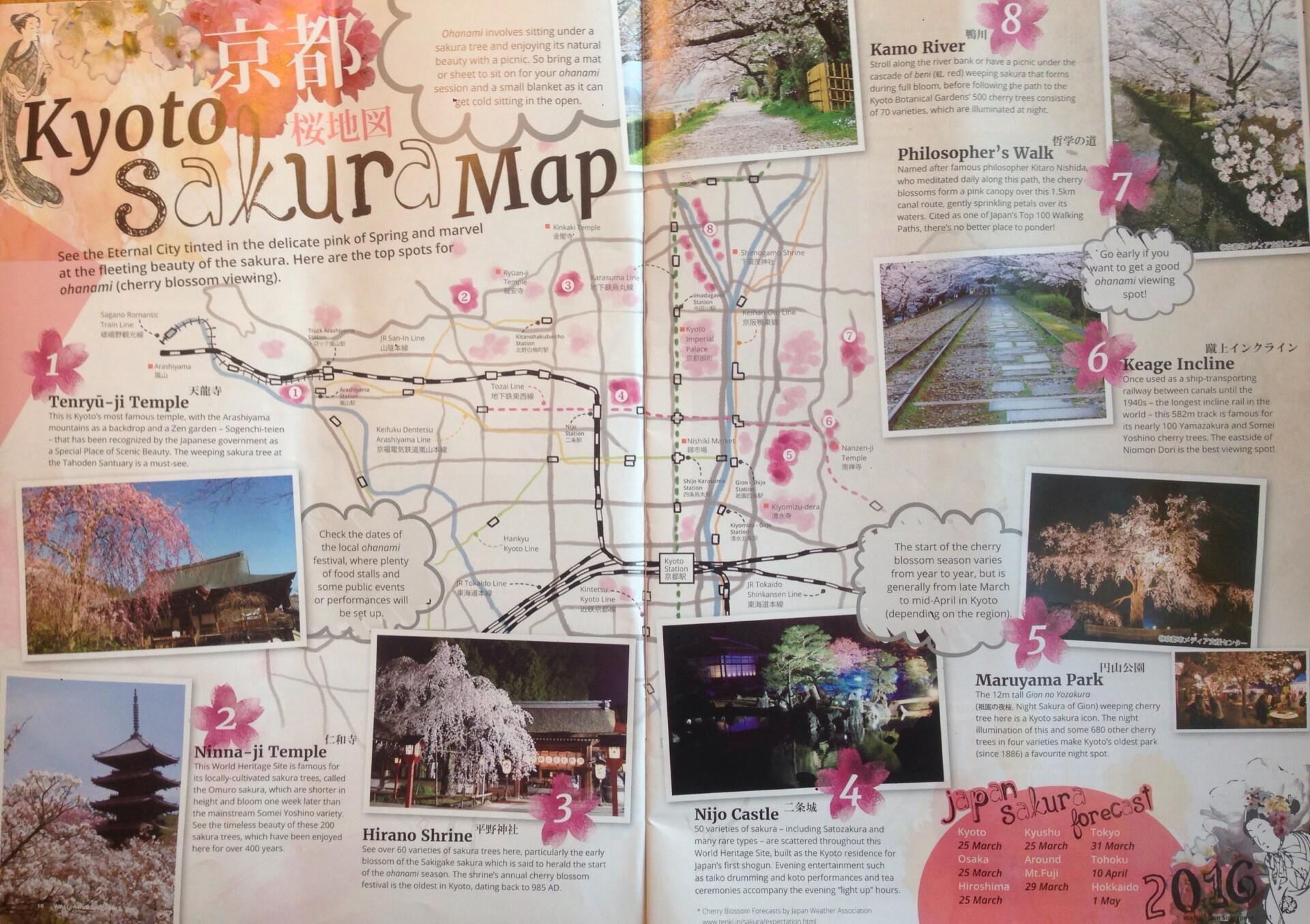 Kyoto Sakura Map