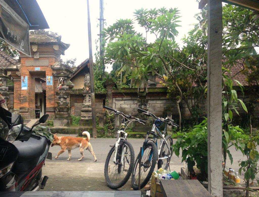 Omstrejfende hunde, templer og en lokal cafe