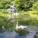Svanesøen i Botanisk Have