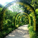Blomsteralle i Botanisk Have i Singapore