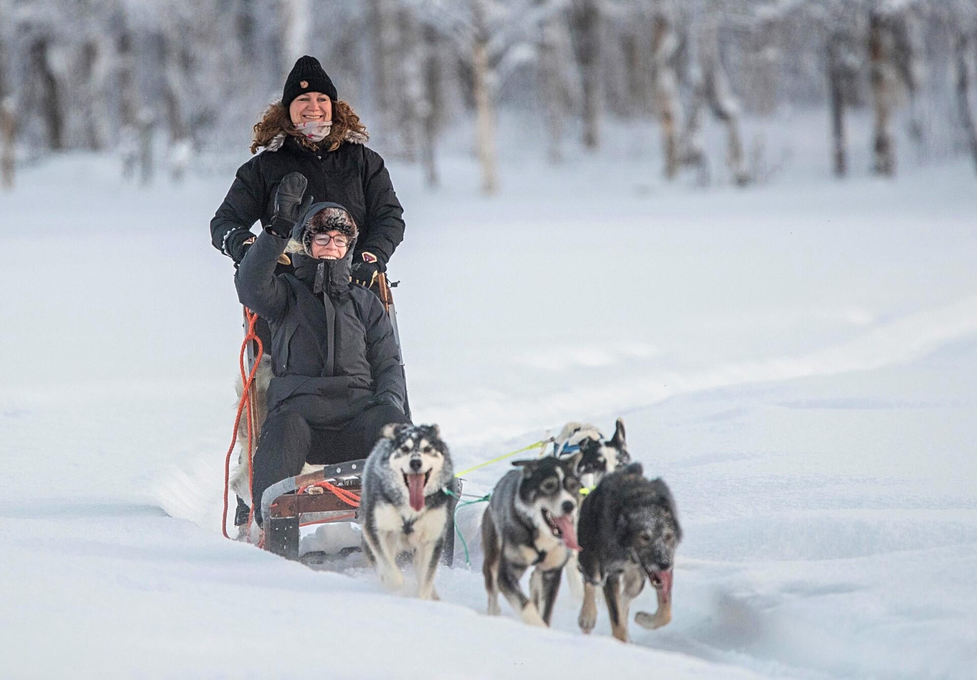 Hundeslædetur i Alta