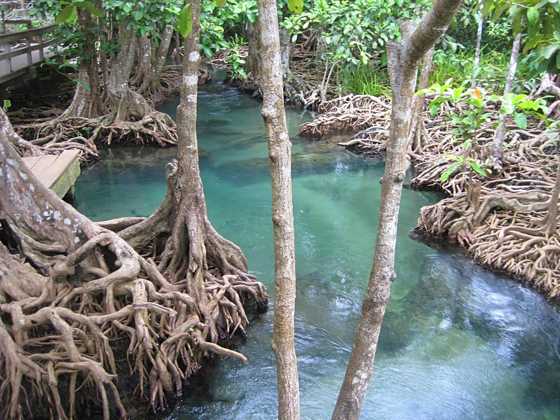 Tha Pom – et Thailandsk natur økosystem ved Krabi