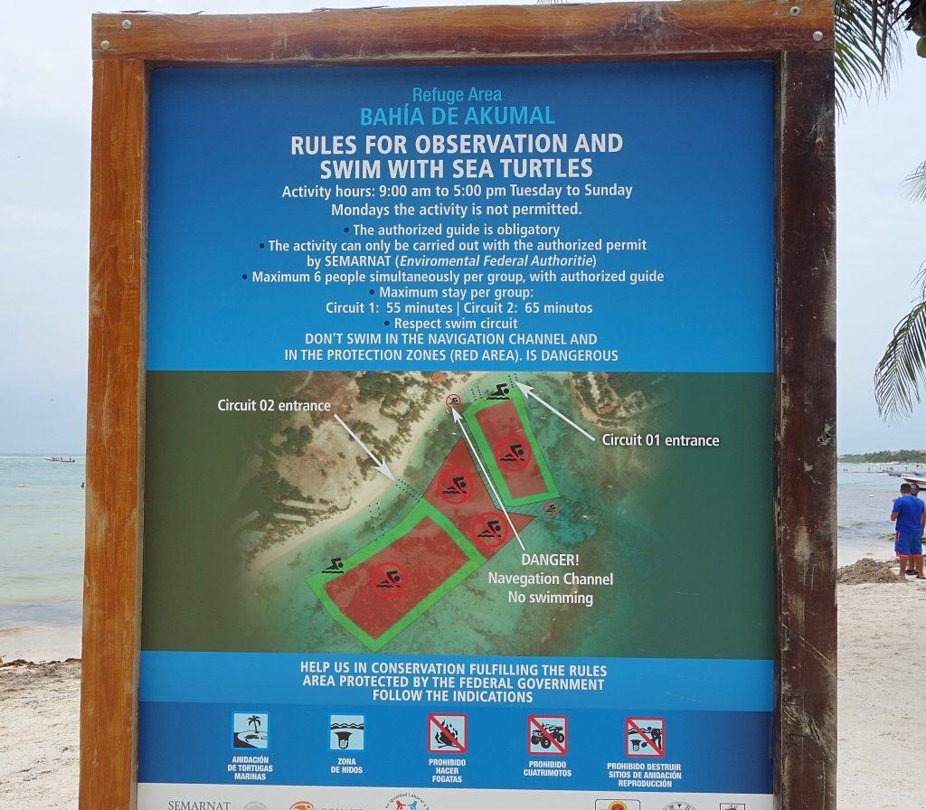 Bahia de Akumal reglerne skildpadde paradis i Akumal