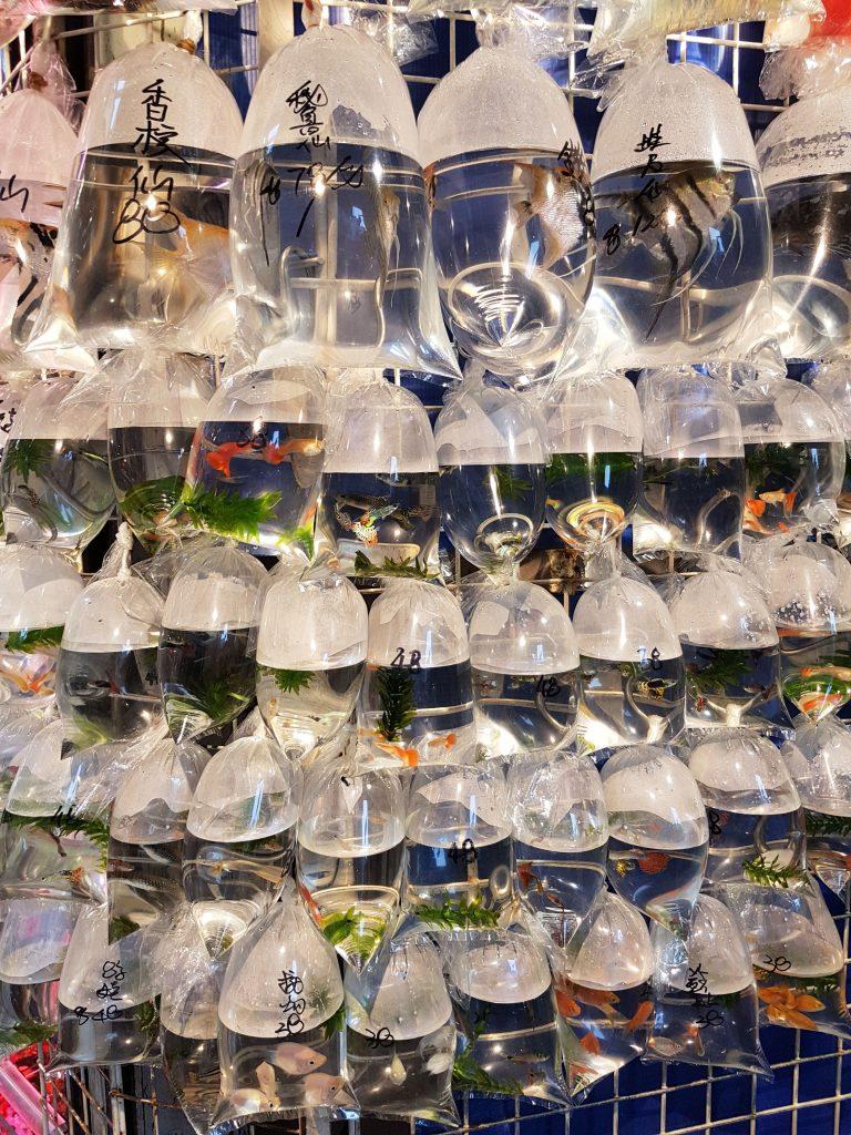 Goldfish market fisk i poser