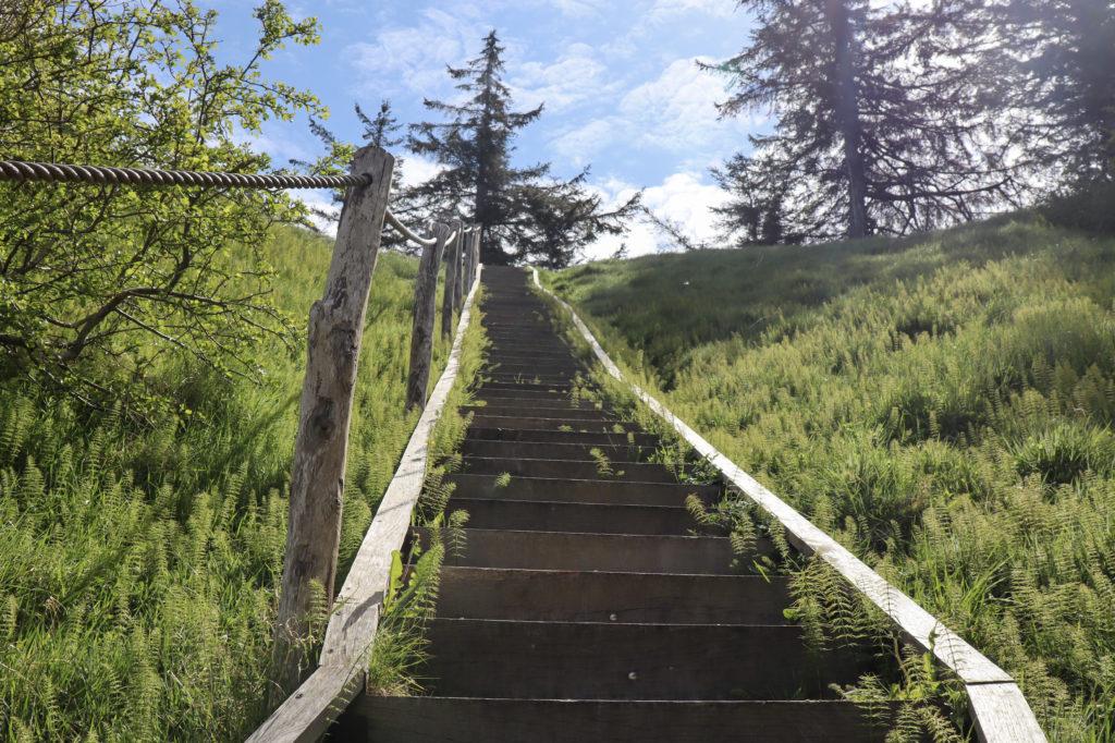 Den nye trappe ved Langstedhullerne Fur